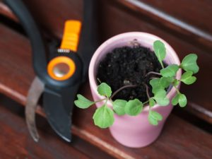 seedling in pot